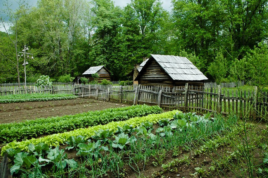 https://metalgaia.files.wordpress.com/2012/08/gardening_for_self_sufficiency.jpg