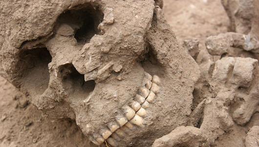 caveskull