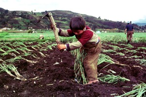 A Colombian child named Andres, age 4, sows onion on a small farm near Tota lake in the village town..